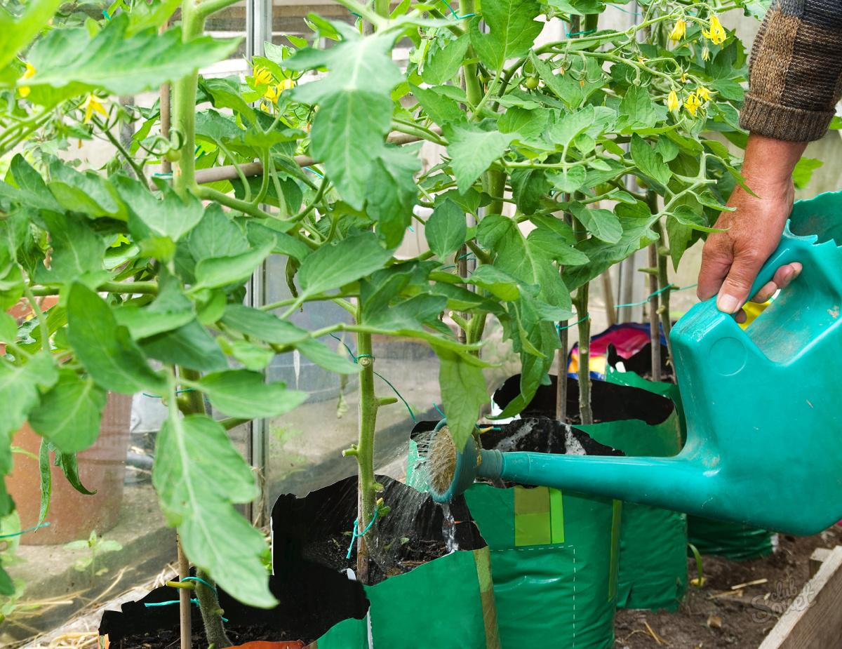 Сад огород своими руками чем подкармливать перцы