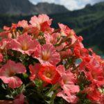 удобрения для цветов на даче