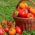 калийные удобрения для томатов