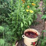 луковая шелуха для огорода или сада применение