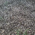 шелуха от семечек