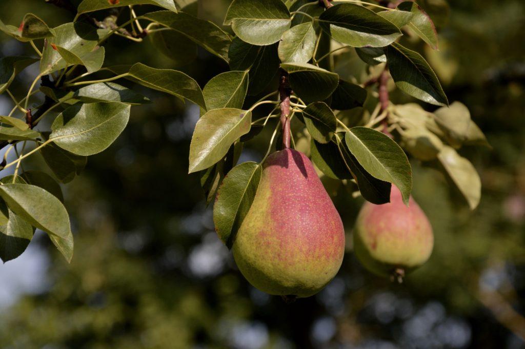 удобрения для посадки плодовых деревьев