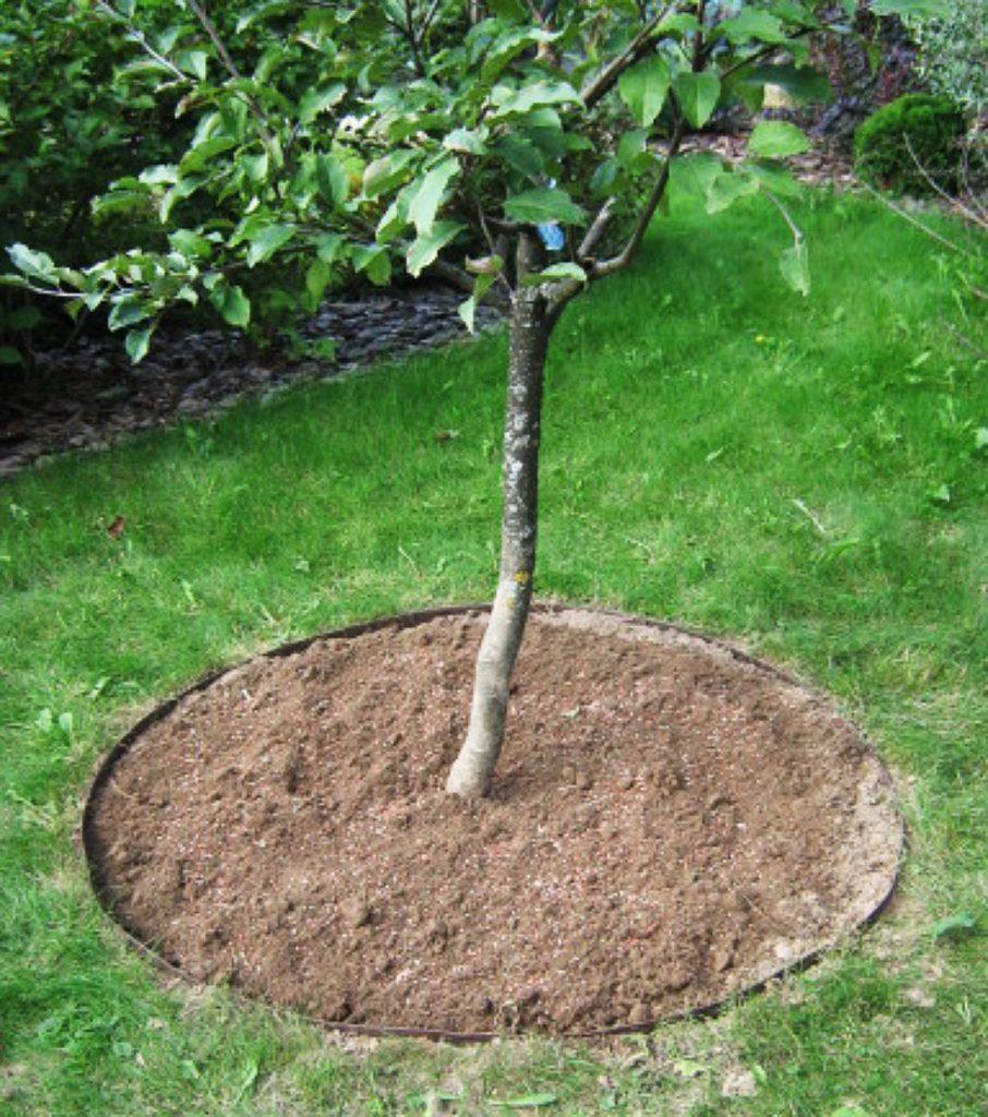 удобрения для деревьев