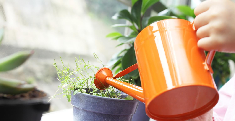 использование удобрений и подкормок для растений
