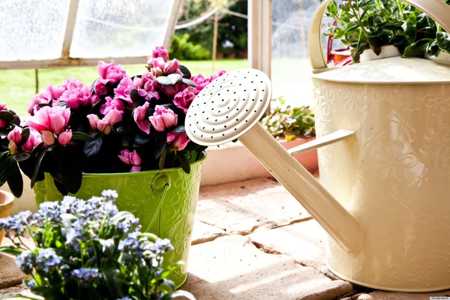 чем подкормить цветы осенью в саду
