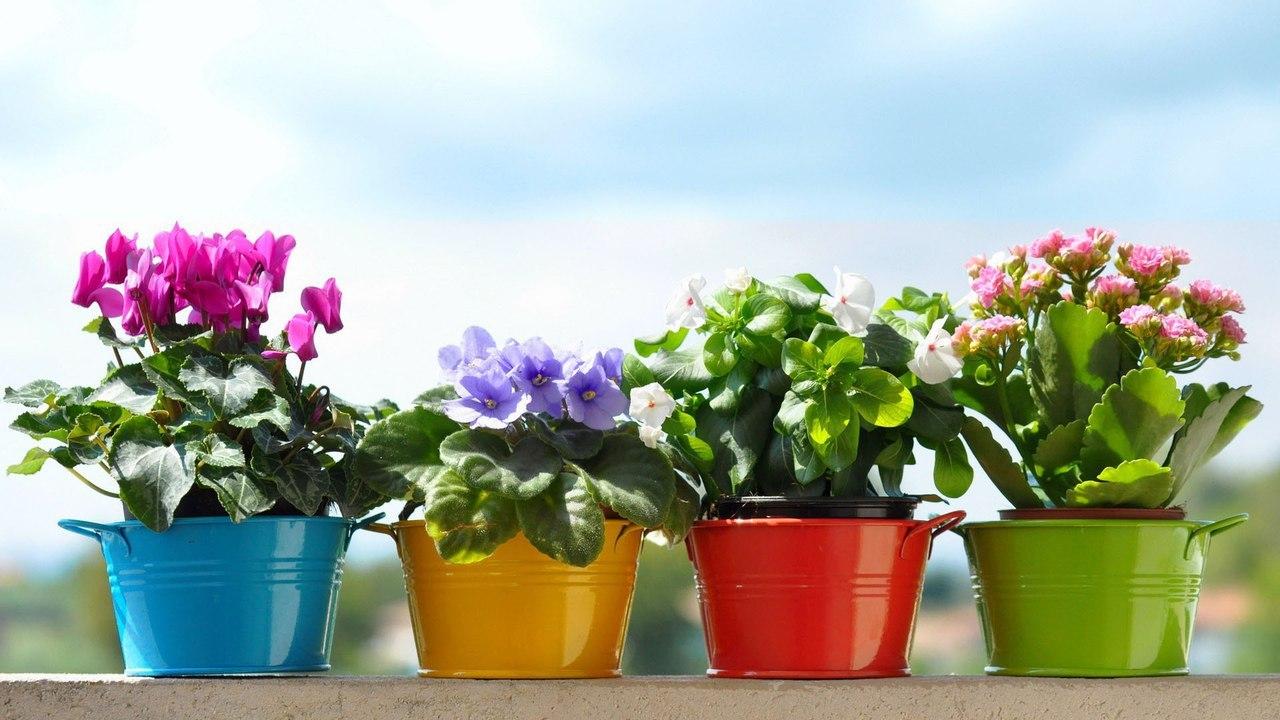 подкормка многолетних цветов осенью
