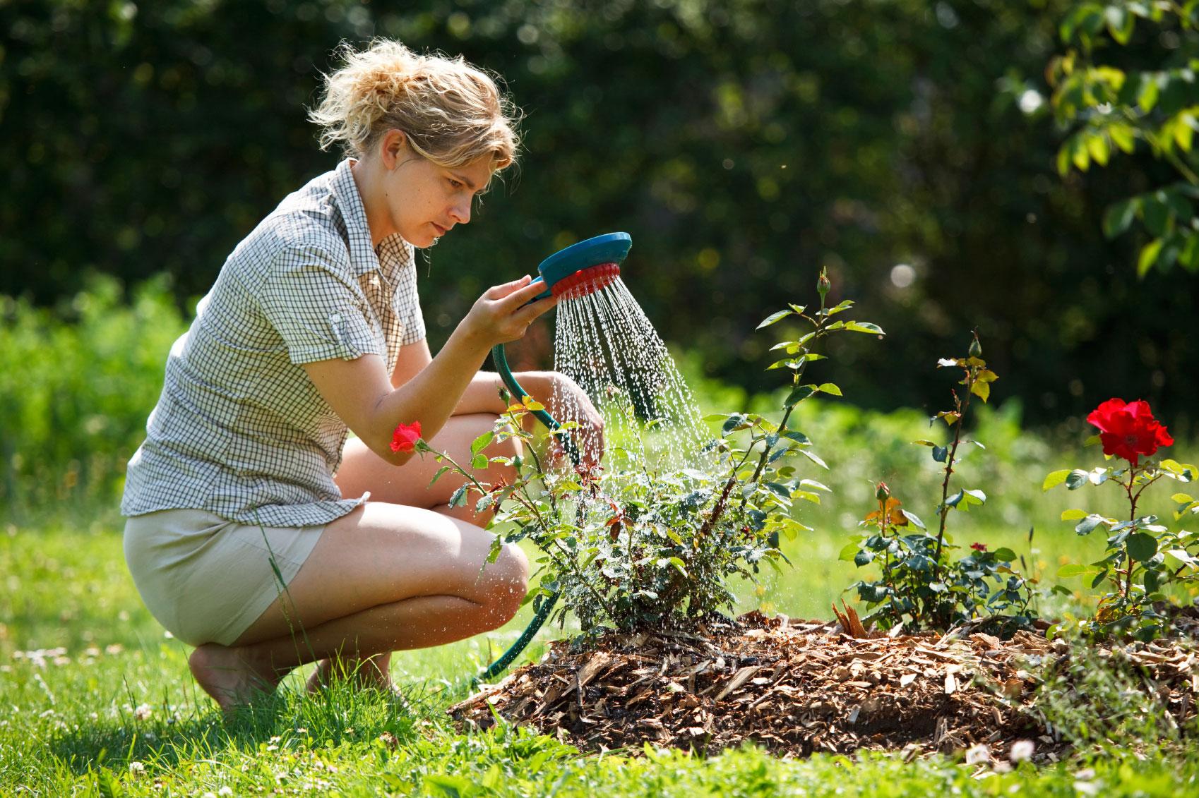 чем подкормить многолетние цветы осенью