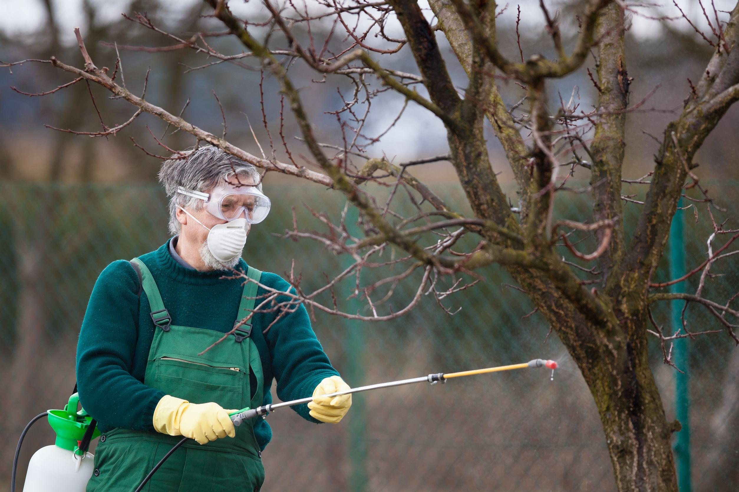 обработка деревьев мочевиной осенью
