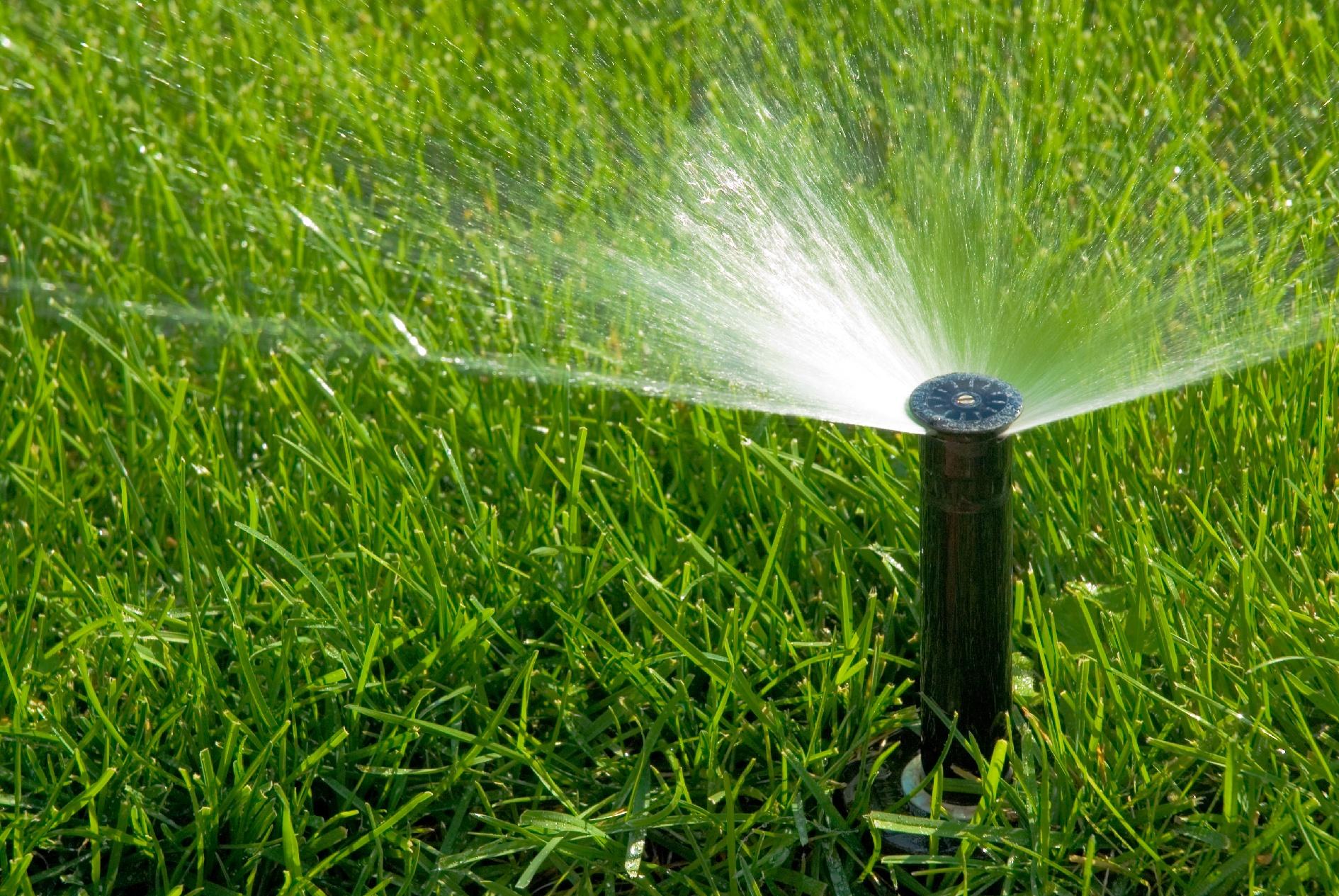 чем подкормить газон