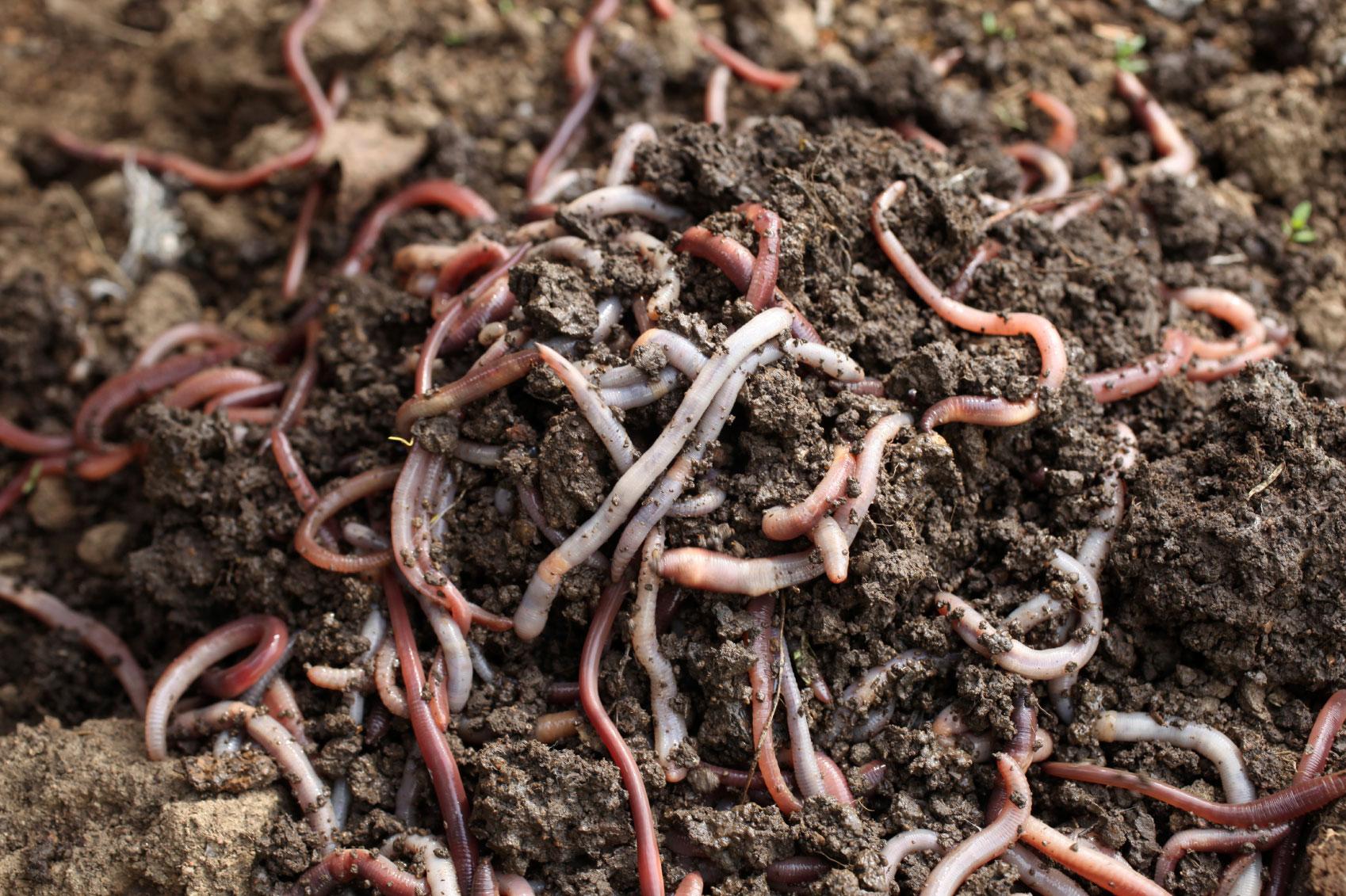 что относится к органическим удобрениям