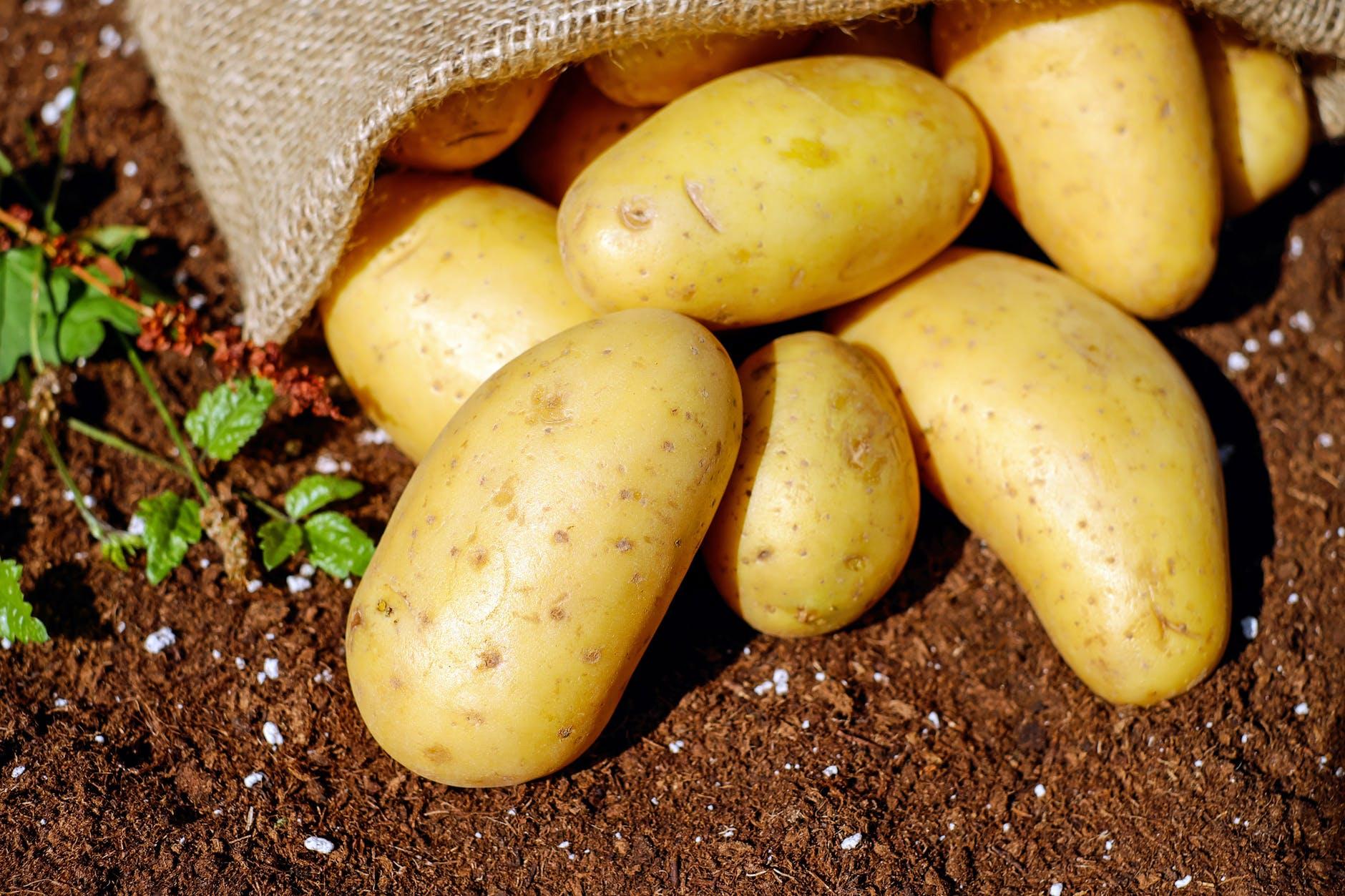 подготовка земли под картофель осенью