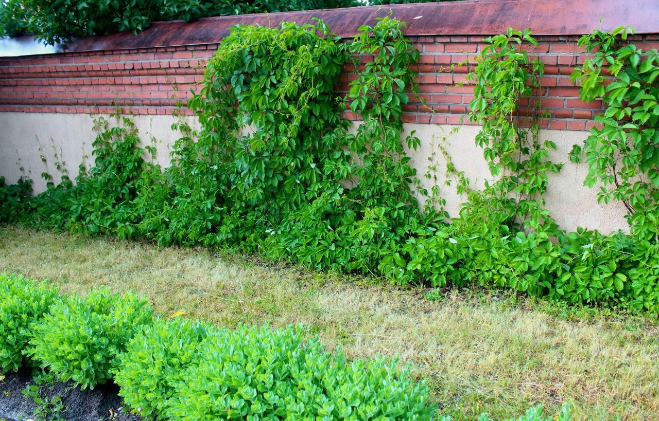 калимагнезия удобрение применение для винограда