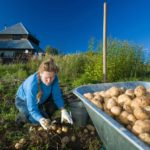 подготовка почвы под картофель осенью