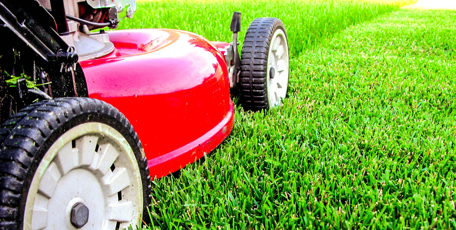 чем удобрять газон осенью
