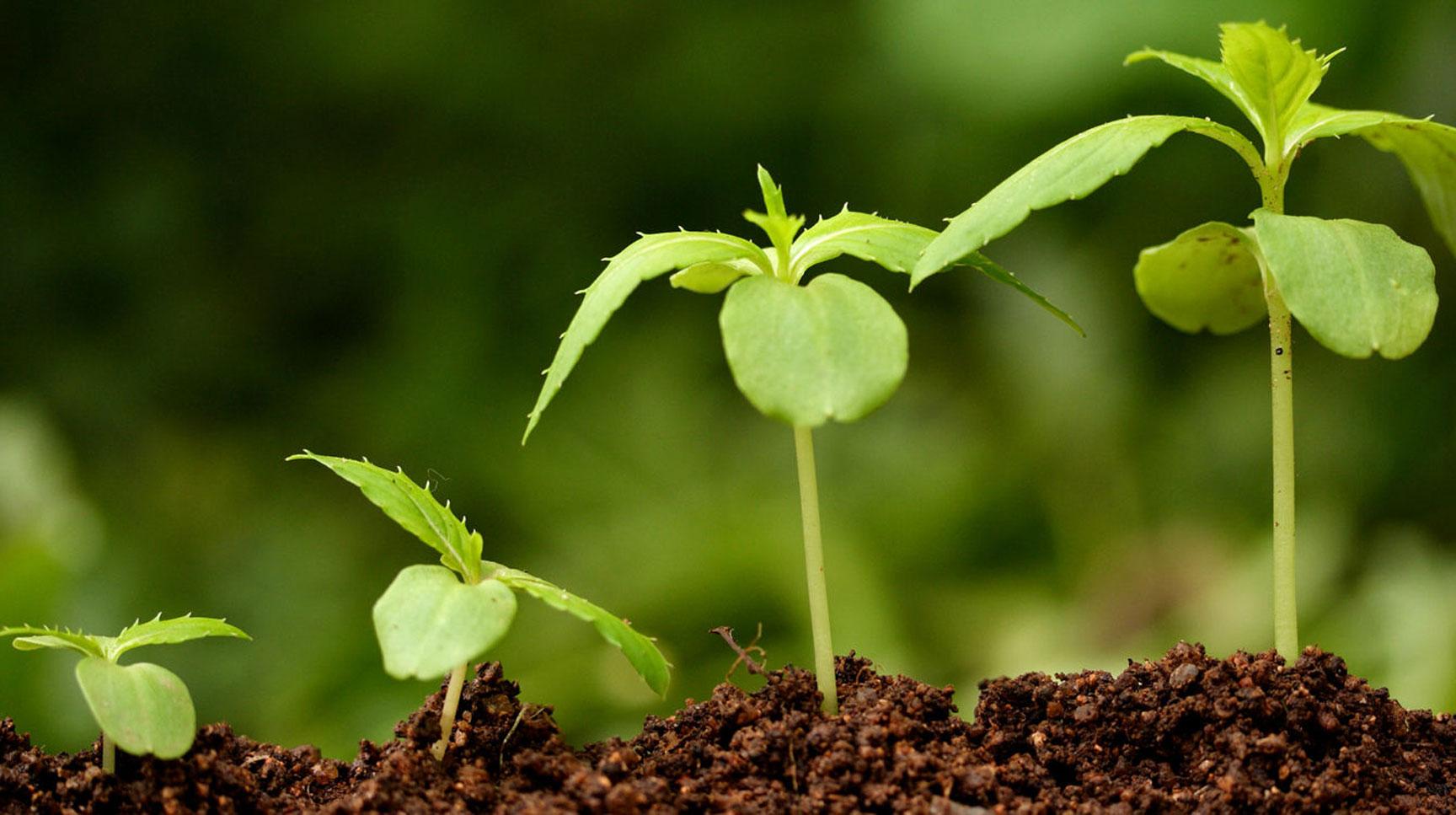 удобрения и стимуляторы роста растений