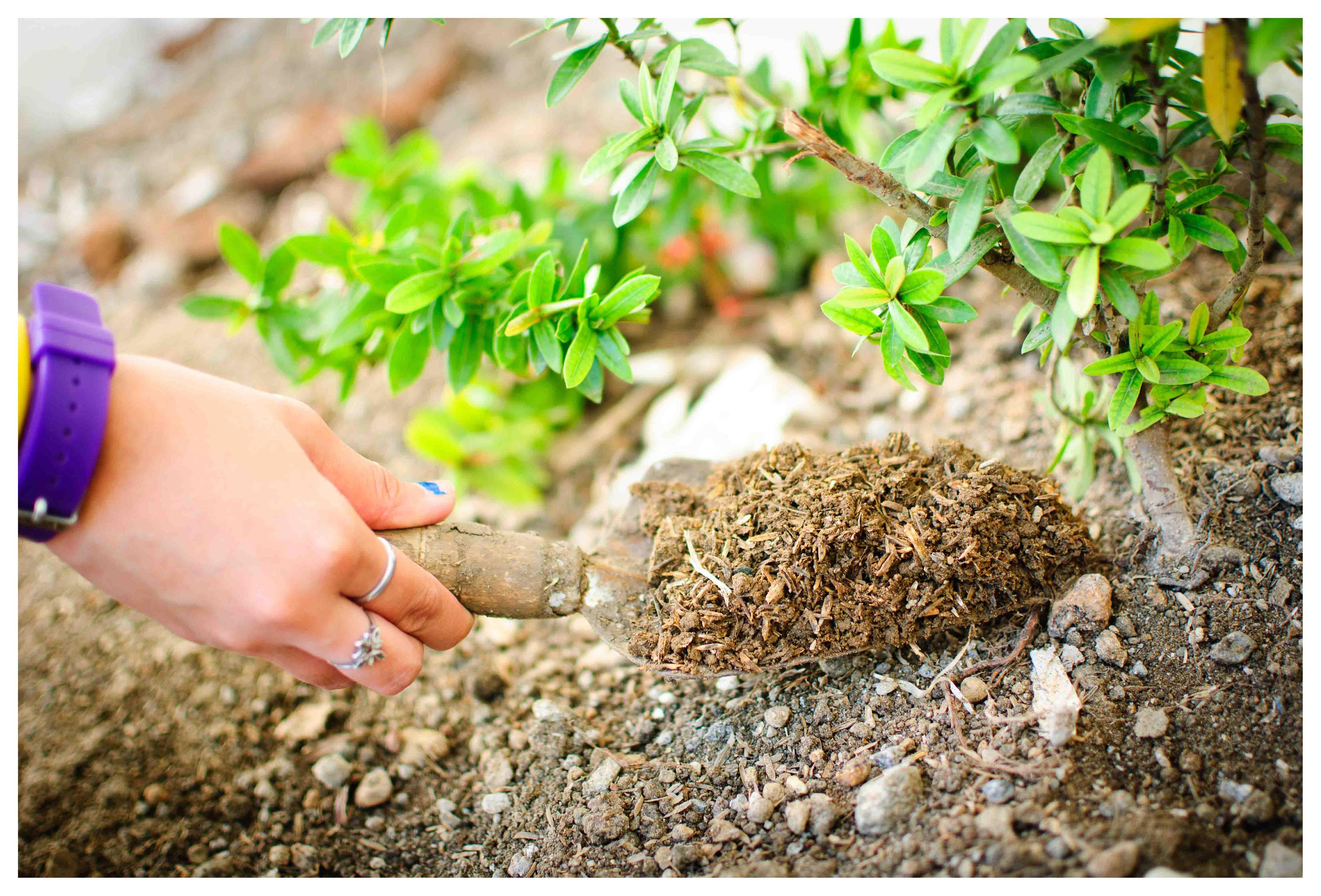хелат железа для растений и его применение