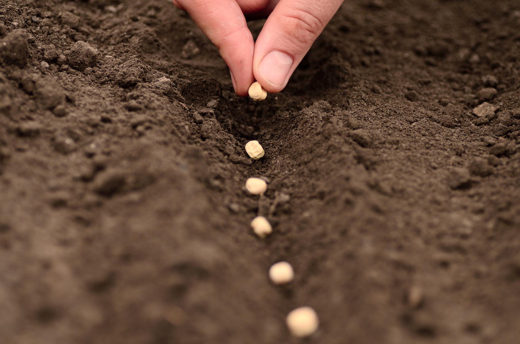 нитроаммофоска удобрение применение на огороде