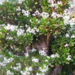 чем подкормить денежное дерево