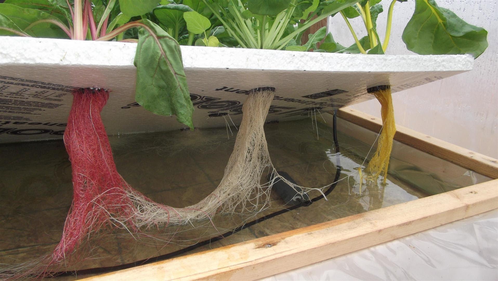удобрение для гидропонного выращивания