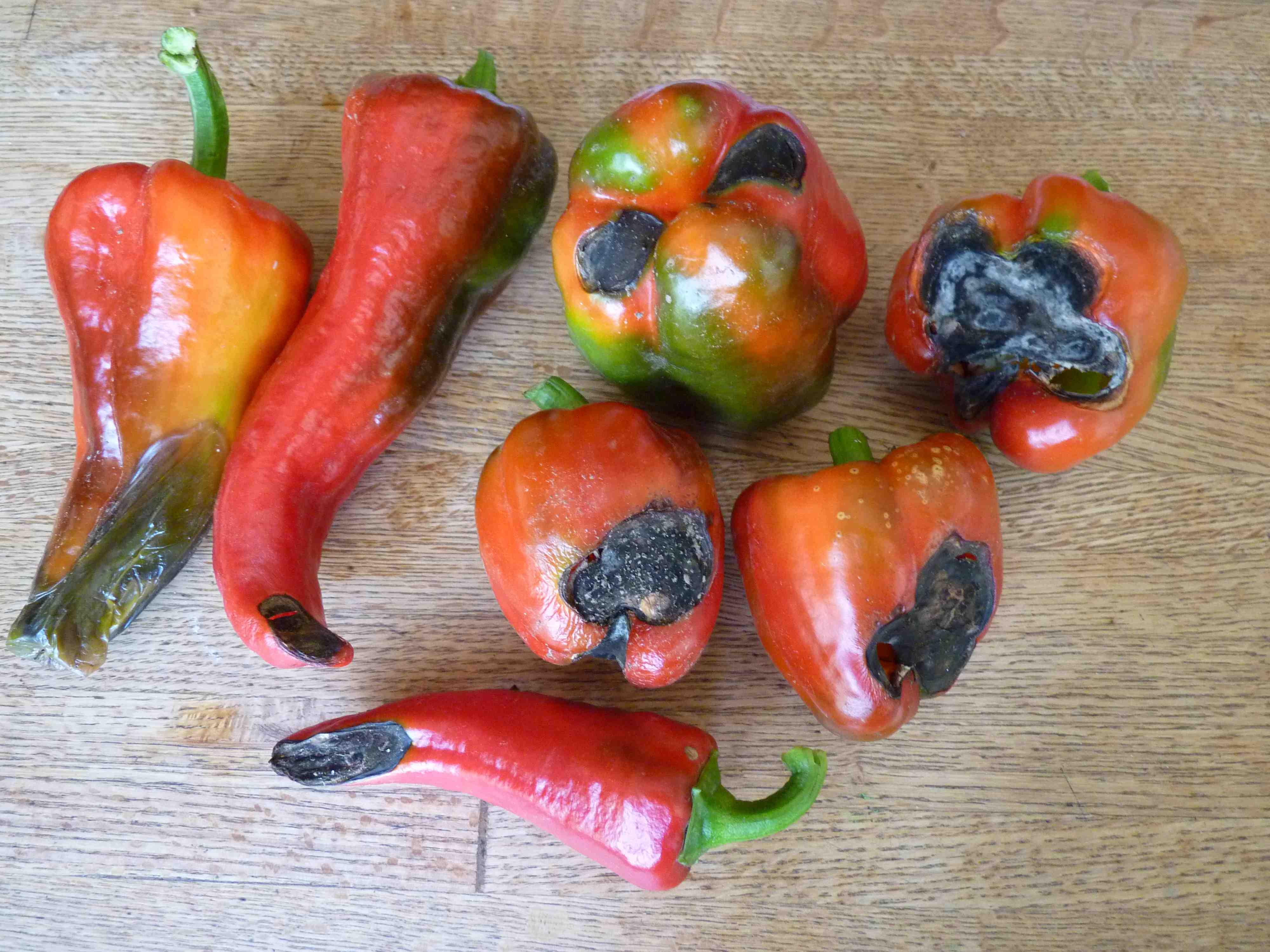 подкормка перца во время плодоношения