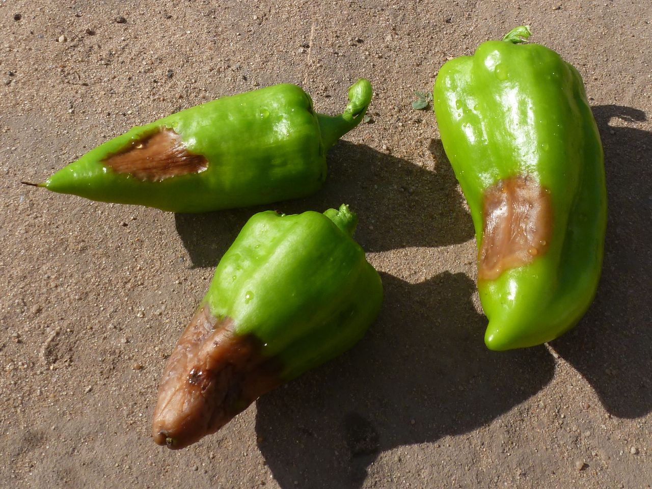 подкормка овощей во время плодоношения