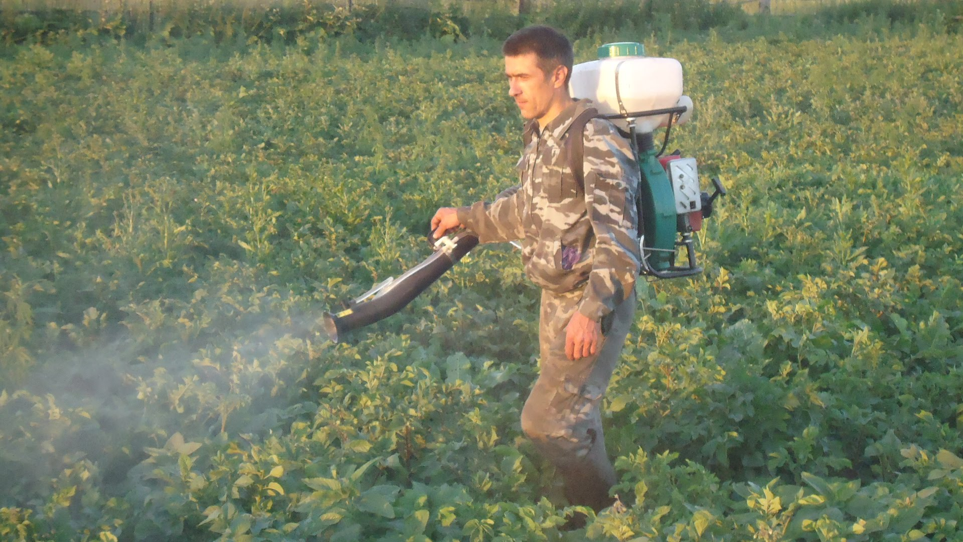 внекорневая подкормка картофеля во время цветения