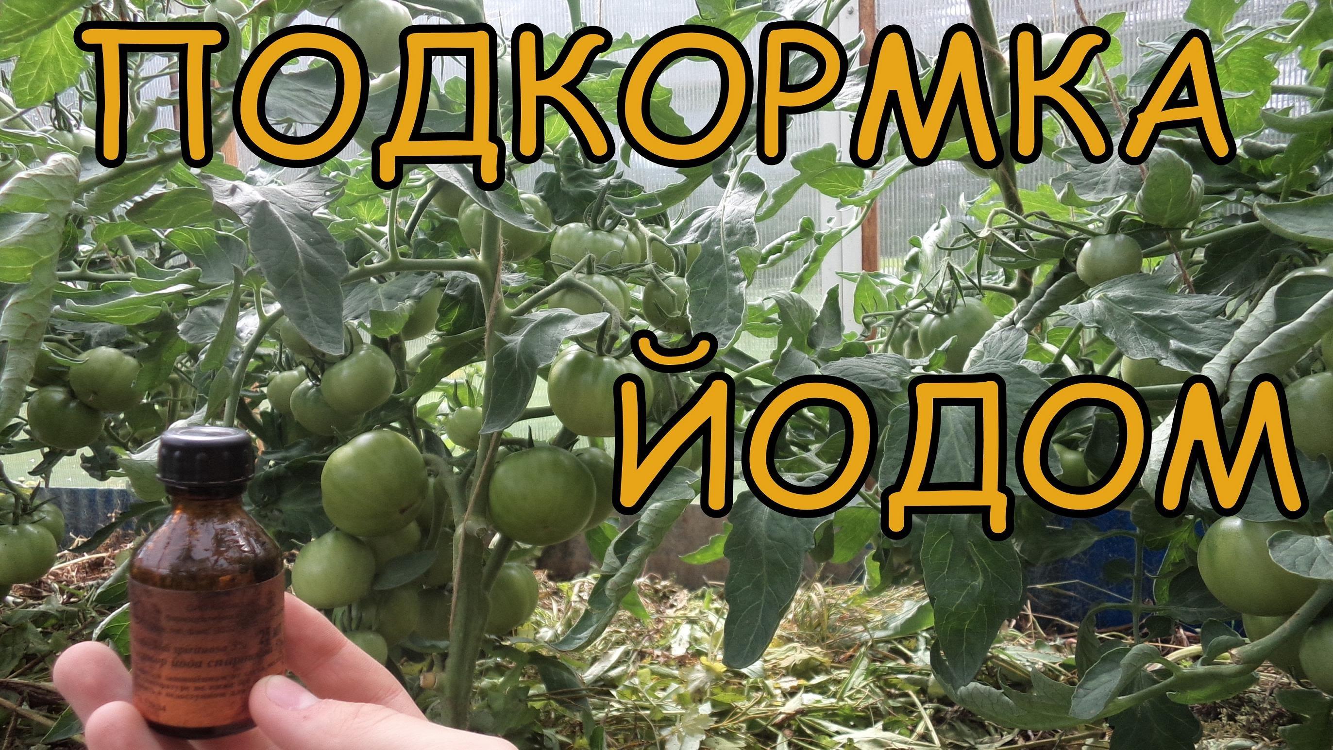 чем подкормить помидоры чтобы быстрее наливались плоды