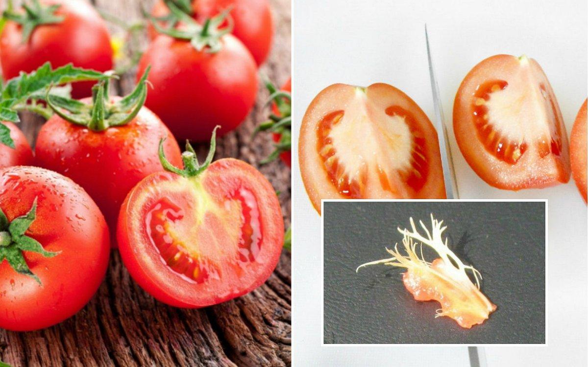 зола как удобрение как применять для томатов