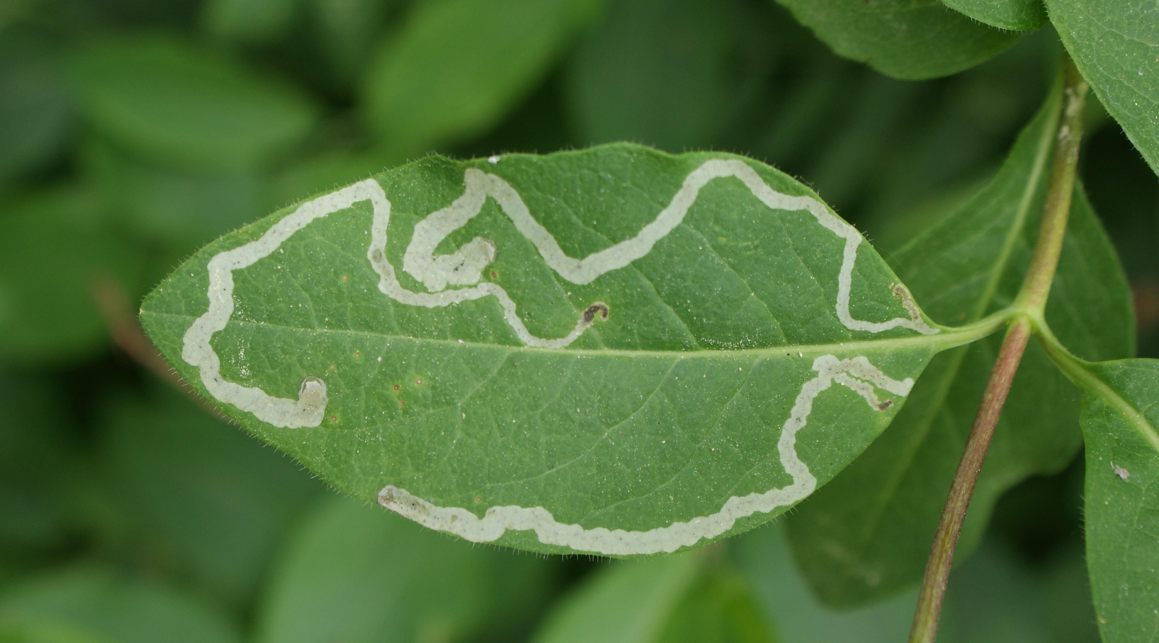 применение луковой шелухи на огороде и дачном участке