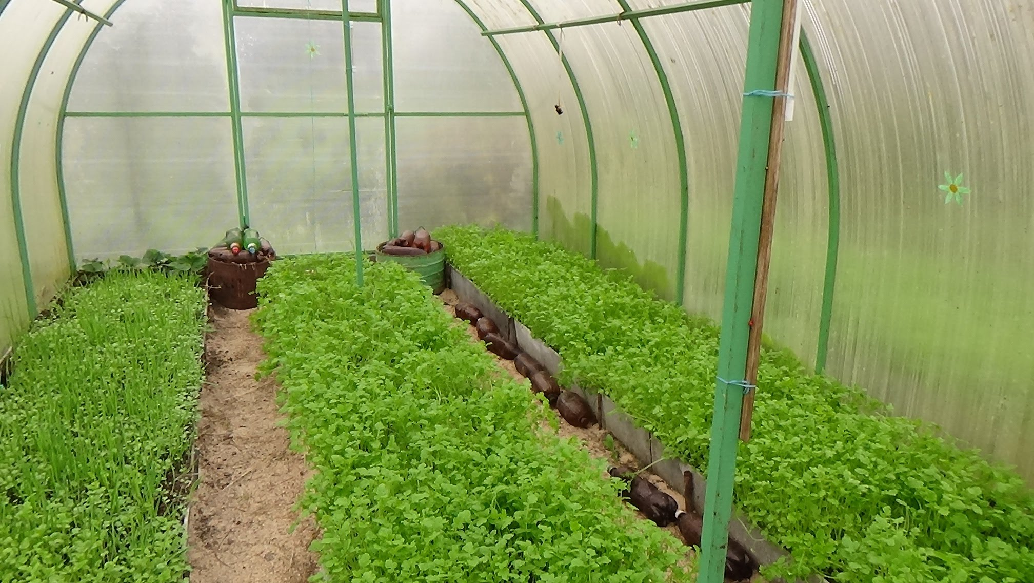 посев ржи для удобрения почвы осенью
