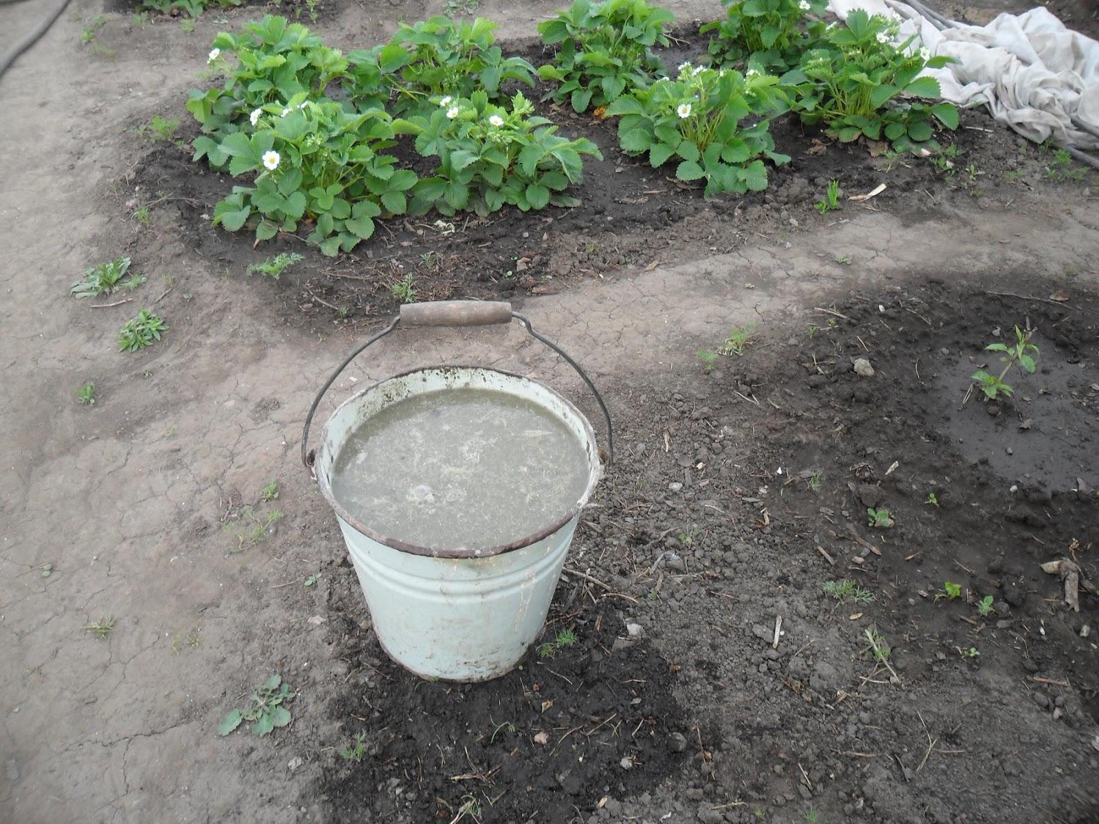 зола как правильно использовать на огороде
