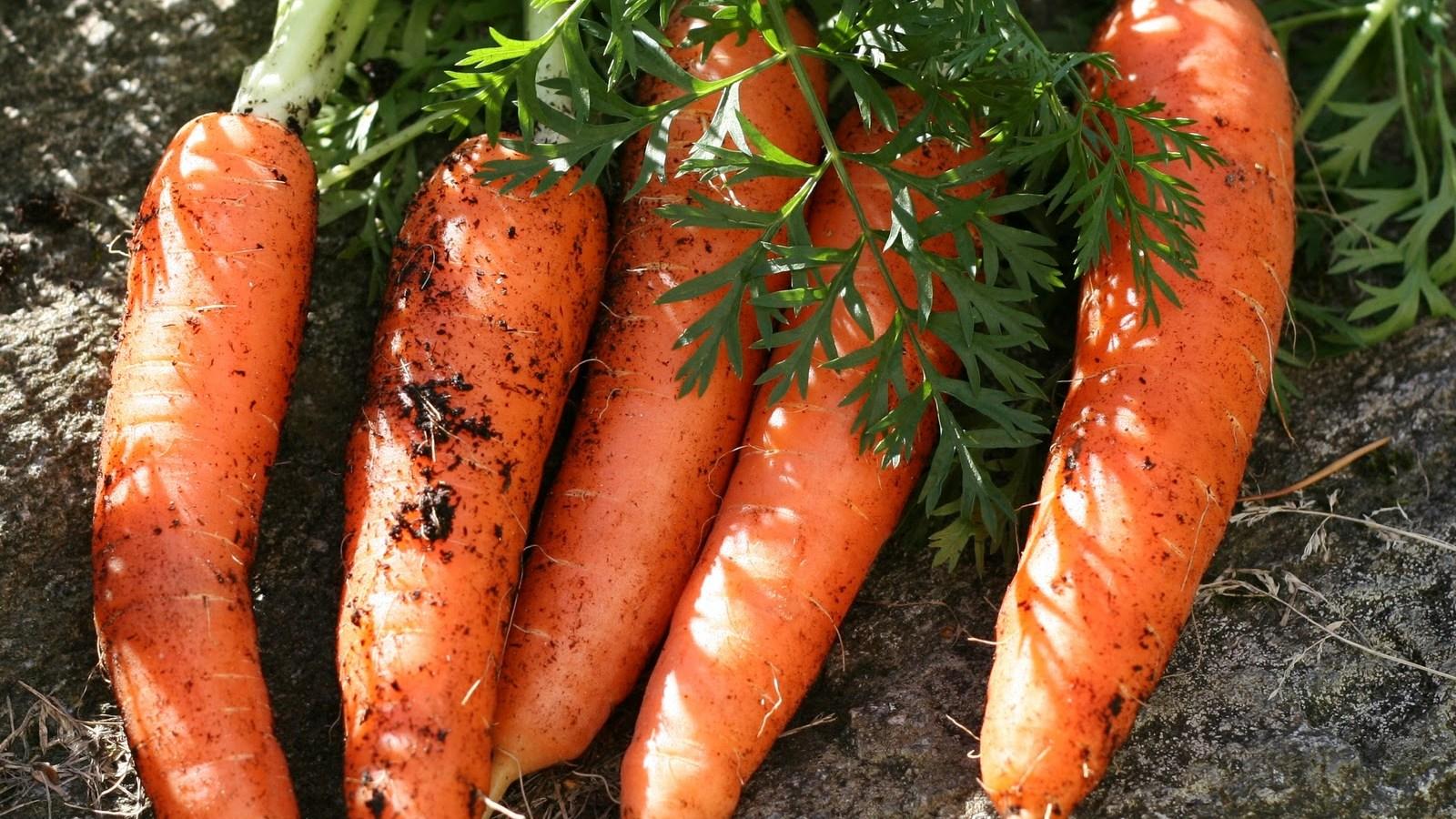 чем подкормить морковь в августе для роста