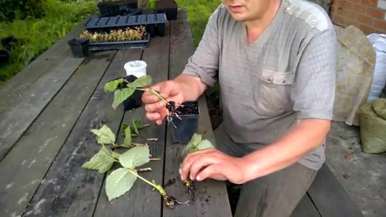 чем подкормить ремонтантную малину осенью