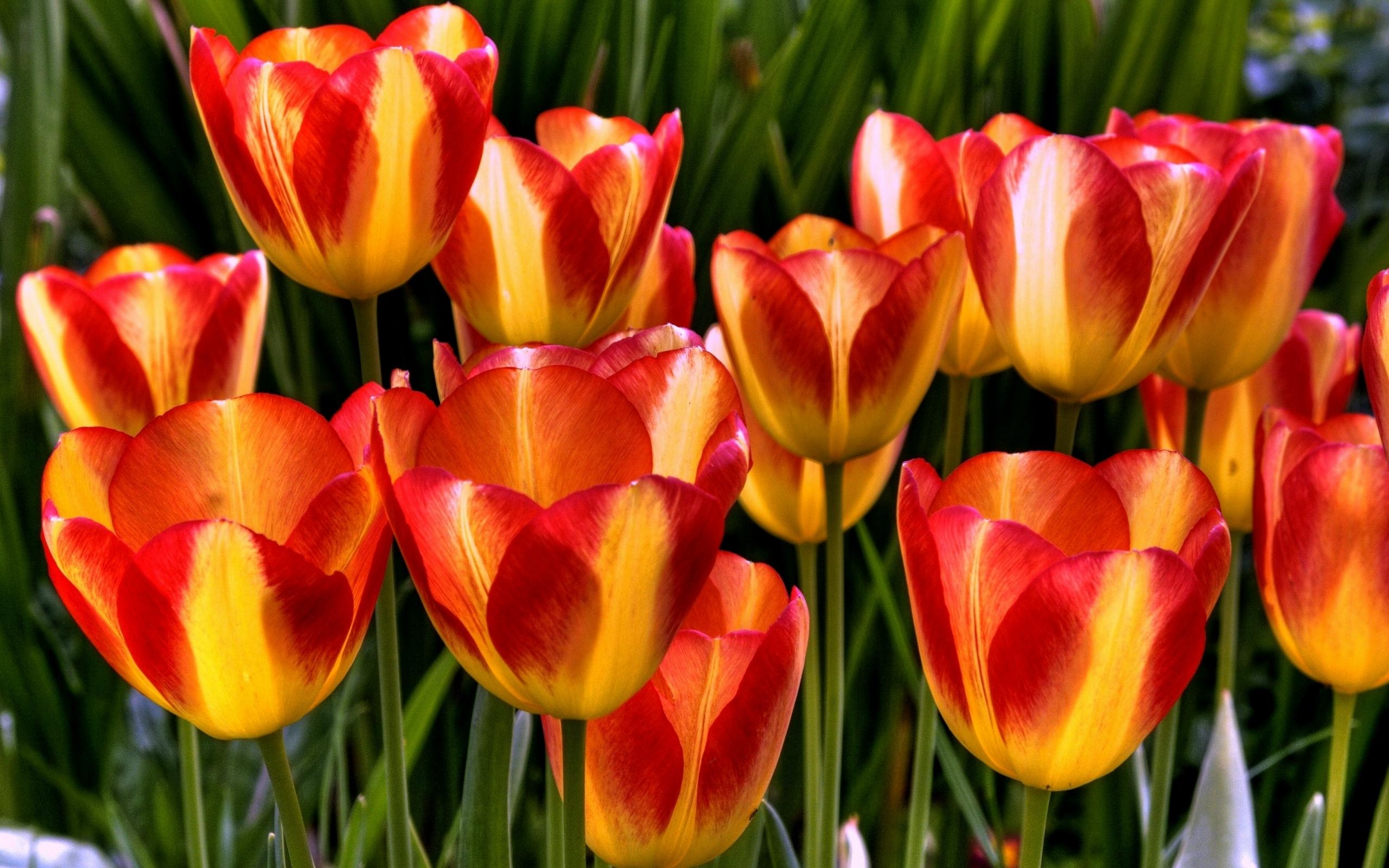 удобрение для тюльпанов осенью