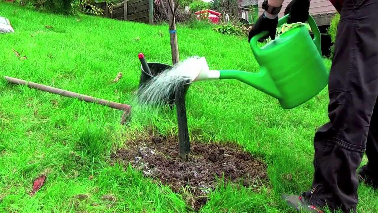 осенние удобрения в саду и огороде