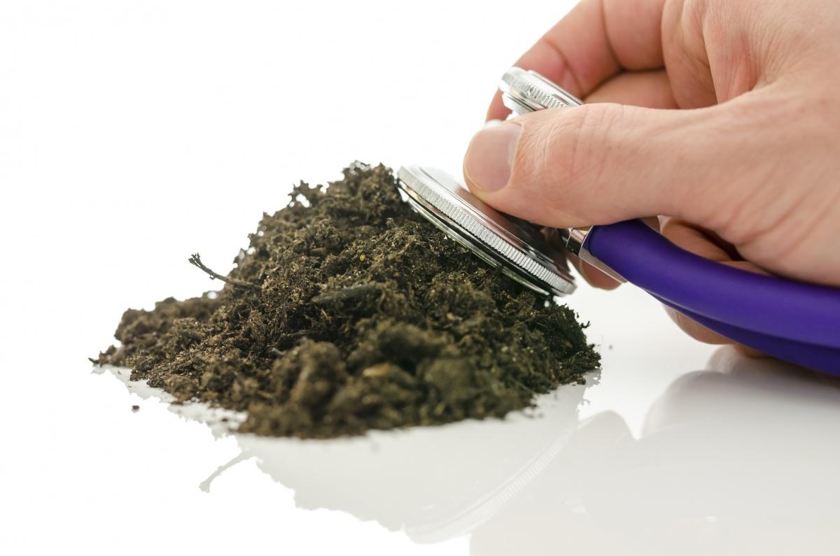 почва для чеснока осенью