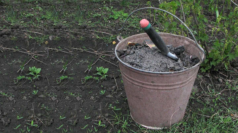 какие удобрения вносить осенью под перекопку