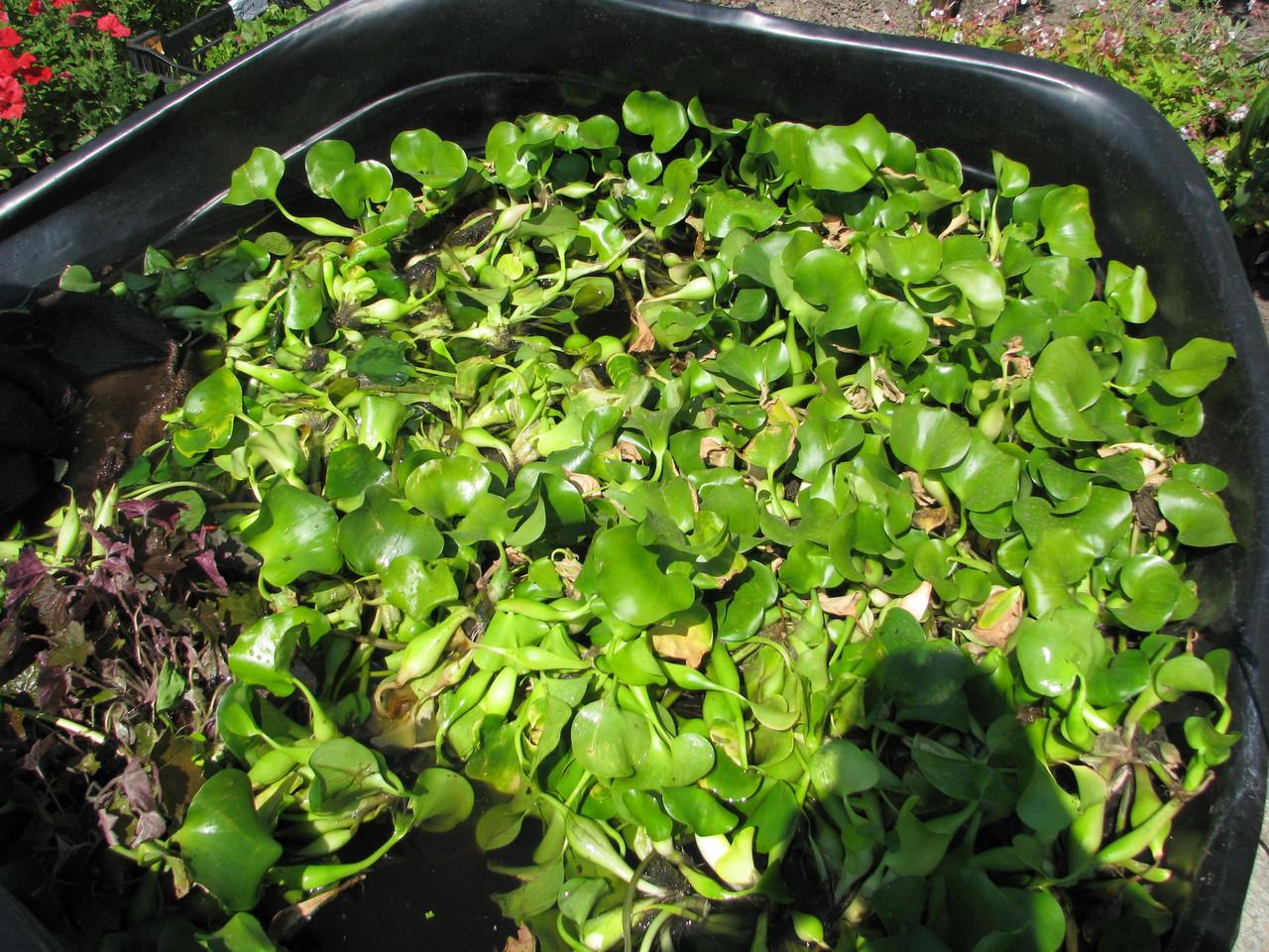 как приготовить компост из травы