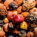 гнилые яблоки как удобрение
