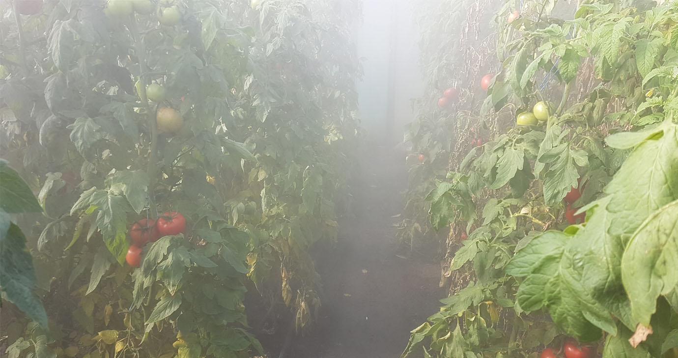 подкормить помидоры йодом