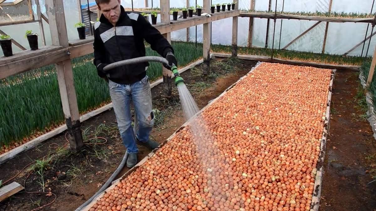 как использовать опилки в саду и огороде