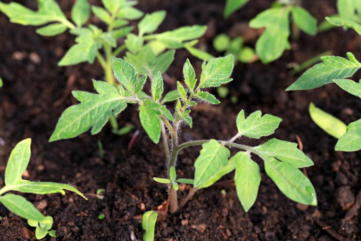 использование компоста на дачном участке