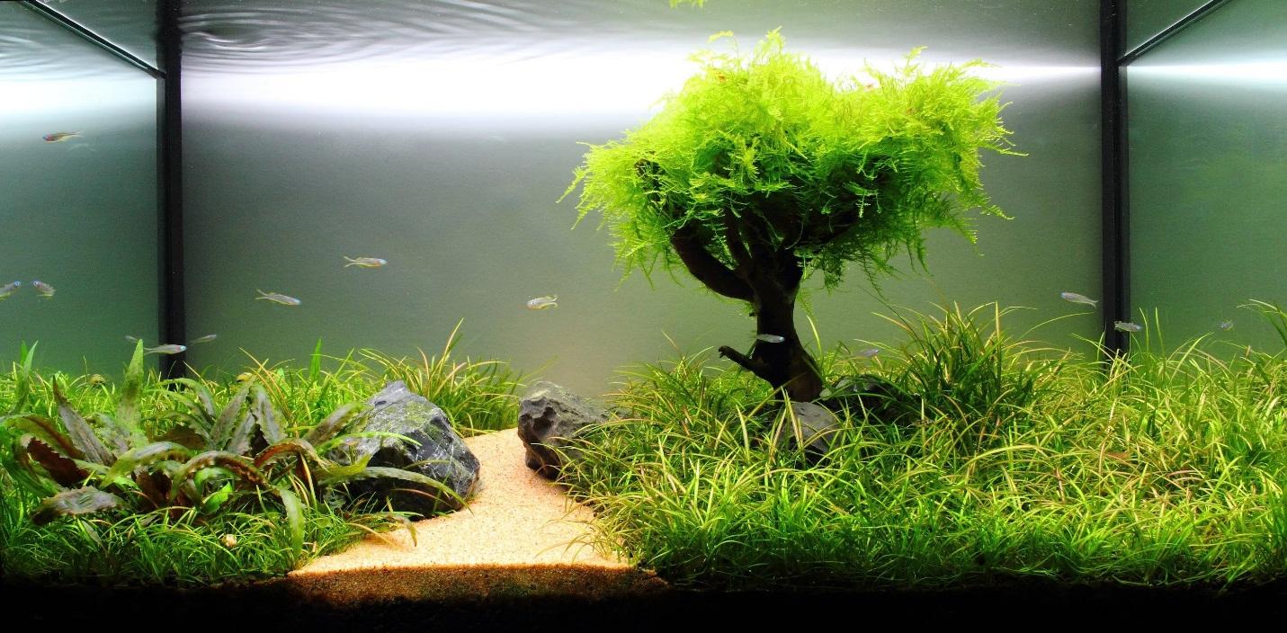 ава подкормка для растений