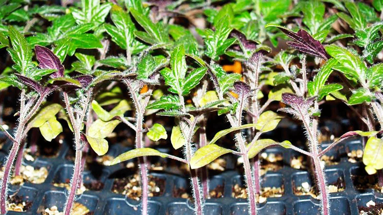 солома на огороде польза или вред