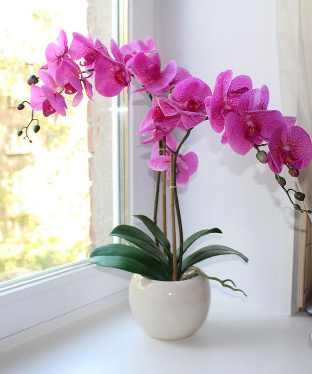 удобрение для орхидей бона форте способ применения