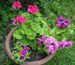 как подкормить цветы дрожжами