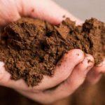 биогумус для комнатных растений