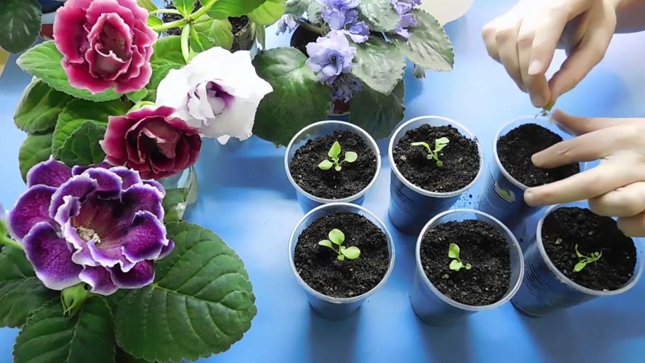 подкормка цветов перекисью водорода