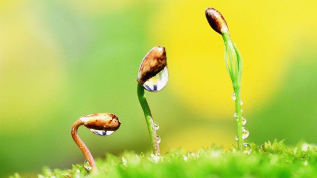 натуральные стимуляторы образования корней