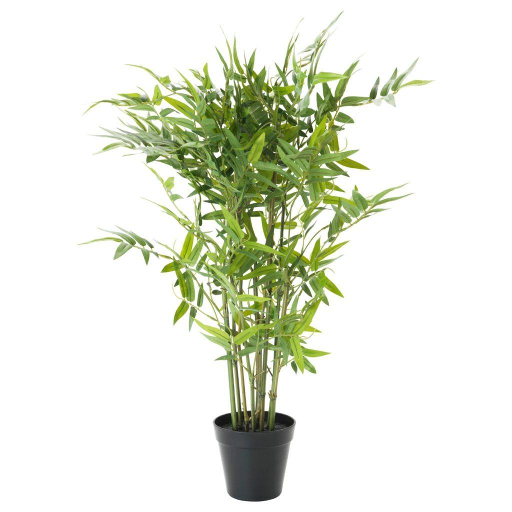 бамбук в домашних условиях